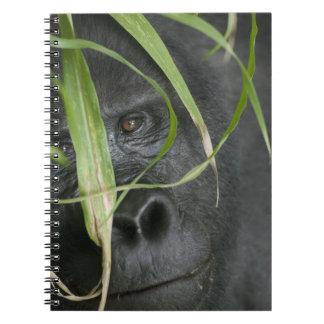 Africa, Uganda, Bwindi Impenetrable National 6 Spiral Note Books