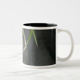 Africa, Uganda, Bwindi Impenetrable National 6 Two-Tone Coffee Mug