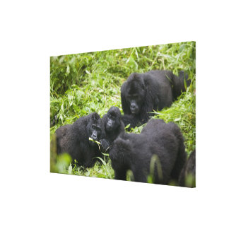 Africa, Uganda, Bwindi Impenetrable National 7 Canvas Print