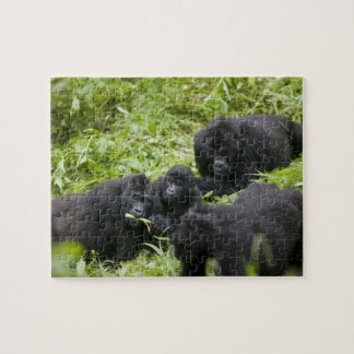 Africa, Uganda, Bwindi Impenetrable National 7 Jigsaw Puzzle