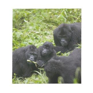 Africa, Uganda, Bwindi Impenetrable National 7 Notepad