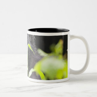 Africa, Uganda, Bwindi Impenetrable National Two-Tone Coffee Mug