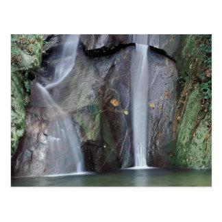 Africa, Uganda, Bwindi Impenetrable rainforest, Postcard