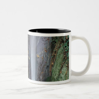 Africa, Uganda, Bwindi Impenetrable rainforest, Two-Tone Coffee Mug