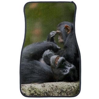 Africa, Uganda, Kibale Forest Reserve, Juvenile 2 Car Mat