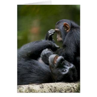 Africa, Uganda, Kibale Forest Reserve, Juvenile 2 Card