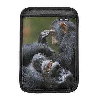 Africa, Uganda, Kibale Forest Reserve, Juvenile 2 iPad Mini Sleeve