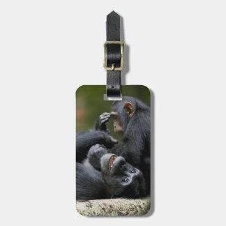 Africa, Uganda, Kibale Forest Reserve, Juvenile 2 Luggage Tag