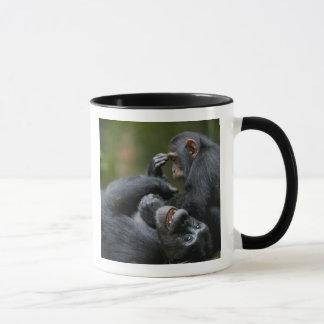 Africa, Uganda, Kibale Forest Reserve, Juvenile 2 Mug