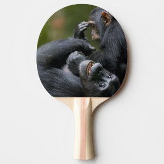 Africa, Uganda, Kibale Forest Reserve, Juvenile 2 Ping Pong Paddle