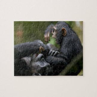 Africa, Uganda, Kibale Forest Reserve, Juvenile Jigsaw Puzzle
