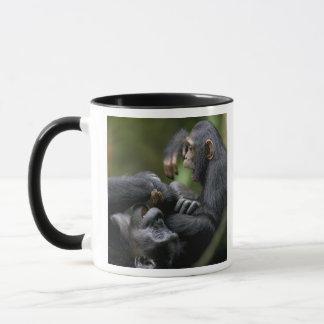 Africa, Uganda, Kibale Forest Reserve, Juvenile Mug