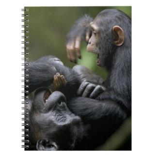 Africa, Uganda, Kibale Forest Reserve, Juvenile Notebooks