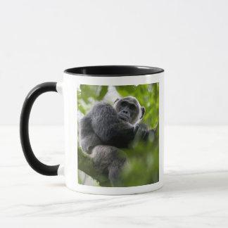 Africa, Uganda, Kibale Forest Reserve, Portrait 2 Mug