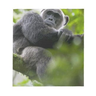 Africa, Uganda, Kibale Forest Reserve, Portrait 2 Notepad