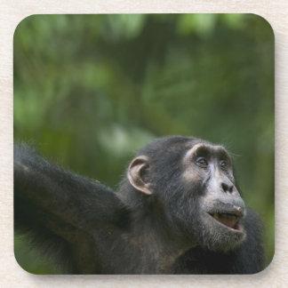 Africa, Uganda, Kibale Forest Reserve, Portrait Drink Coasters