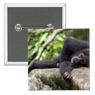 Africa, Uganda, Kibale Forest Reserve, Young 15 Cm Square Badge