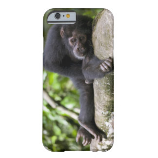Africa, Uganda, Kibale Forest Reserve, Young Barely There iPhone 6 Case
