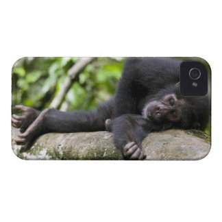 Africa, Uganda, Kibale Forest Reserve, Young iPhone 4 Case-Mate Case