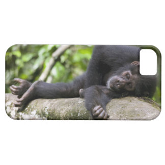 Africa, Uganda, Kibale Forest Reserve, Young iPhone 5 Cover