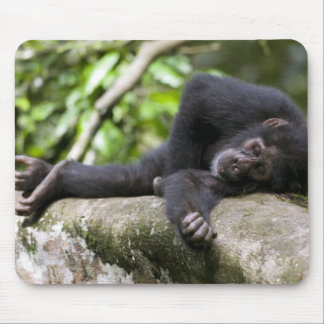 Africa, Uganda, Kibale Forest Reserve, Young Mouse Mat