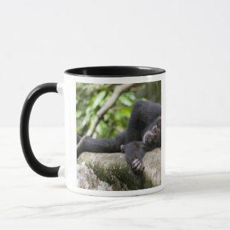 Africa, Uganda, Kibale Forest Reserve, Young Mug