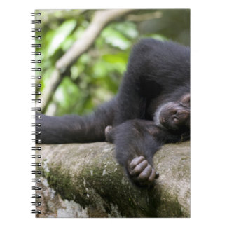 Africa, Uganda, Kibale Forest Reserve, Young Notebooks