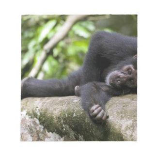 Africa, Uganda, Kibale Forest Reserve, Young Notepad
