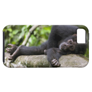 Africa, Uganda, Kibale Forest Reserve, Young Tough iPhone 5 Case