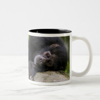 Africa, Uganda, Kibale Forest Reserve, Young Two-Tone Coffee Mug