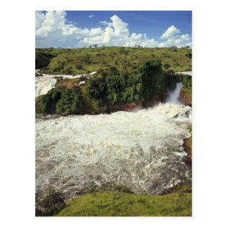 Africa, Uganda, Murchison Falls NP. The frothy Postcard