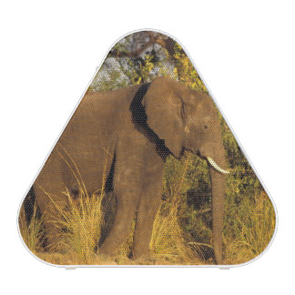 Africa, Zimbabwe, Victoria Falls National Park.