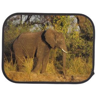Africa, Zimbabwe, Victoria Falls National Park. Car Mat