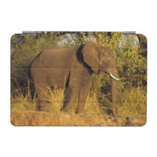 Africa, Zimbabwe, Victoria Falls National Park. iPad Mini Cover