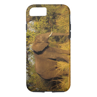 Africa, Zimbabwe, Victoria Falls National Park. iPhone 8/7 Case
