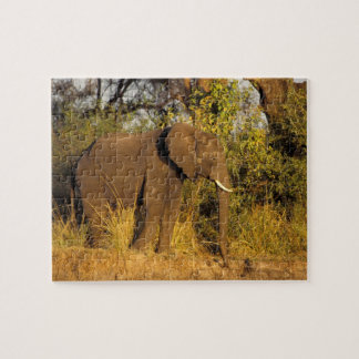 Africa, Zimbabwe, Victoria Falls National Park. Jigsaw Puzzle