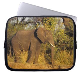 Africa, Zimbabwe, Victoria Falls National Park. Laptop Sleeve