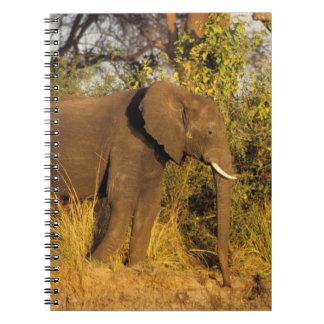 Africa, Zimbabwe, Victoria Falls National Park. Note Books
