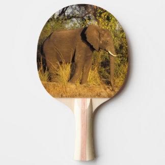 Africa, Zimbabwe, Victoria Falls National Park. Ping Pong Paddle