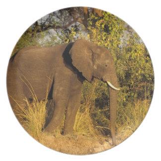 Africa, Zimbabwe, Victoria Falls National Park. Plate
