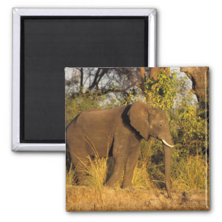 Africa, Zimbabwe, Victoria Falls National Park. Square Magnet