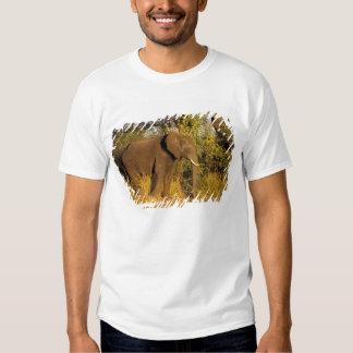 Africa, Zimbabwe, Victoria Falls National Park. Tee Shirt