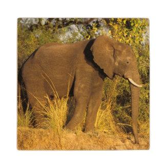 Africa, Zimbabwe, Victoria Falls National Park. Wood Coaster