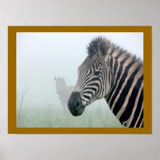 African Animals Zebra Stripes In The Mist Poster