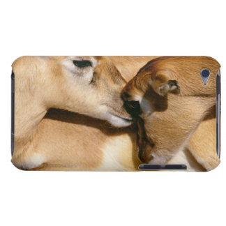 African antelope and fawn iPod touch cover