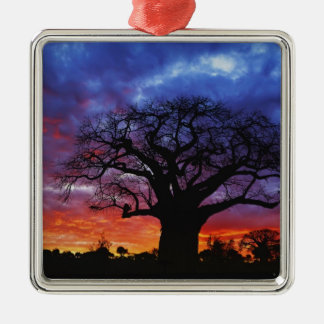 African baobab tree, Adansonia digitata, 2 Christmas Ornament