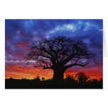 African baobab tree, Adansonia digitata, 2 Greeting Card