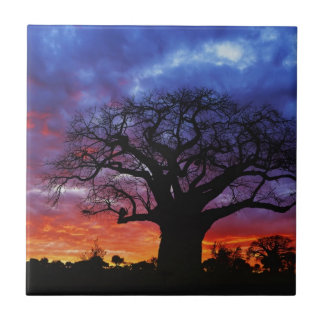 African baobab tree, Adansonia digitata 2 Small Square Tile