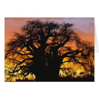 African baobab tree, Adansonia digitata, Greeting Card