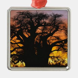 African baobab tree, Adansonia digitata, Silver-Colored Square Decoration